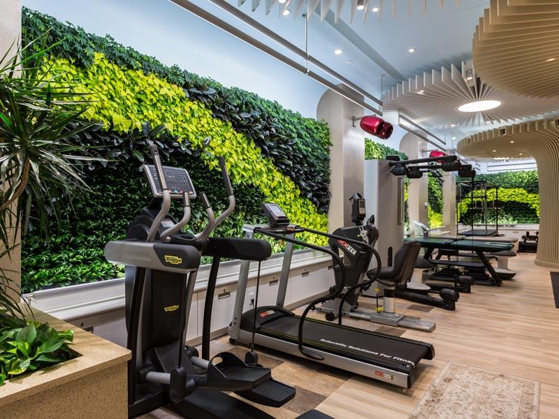 moss wall gym