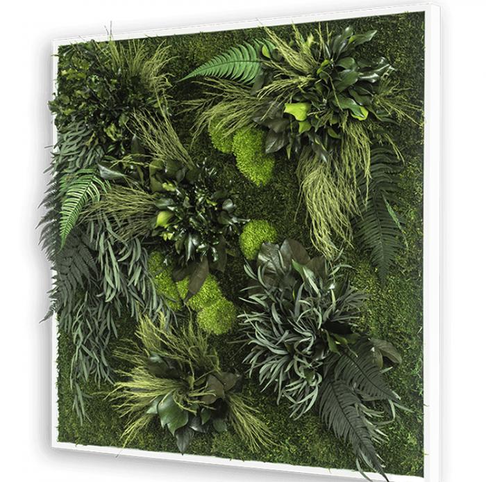 Plant wall art frame