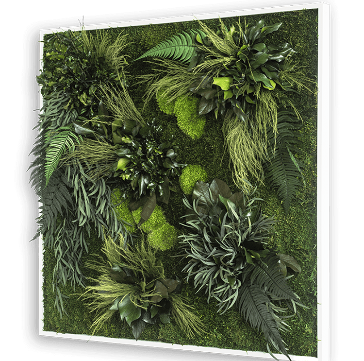 Plant wall art frame