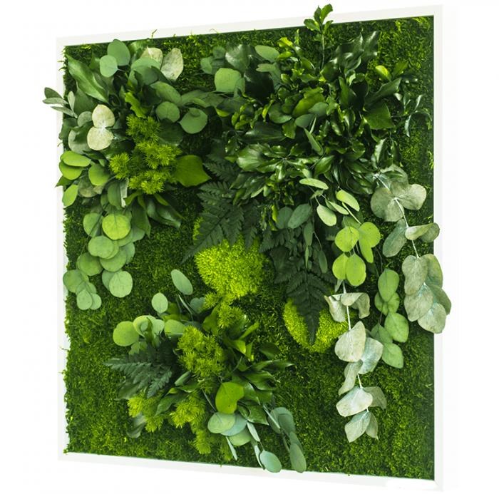 preserved Plant Frame