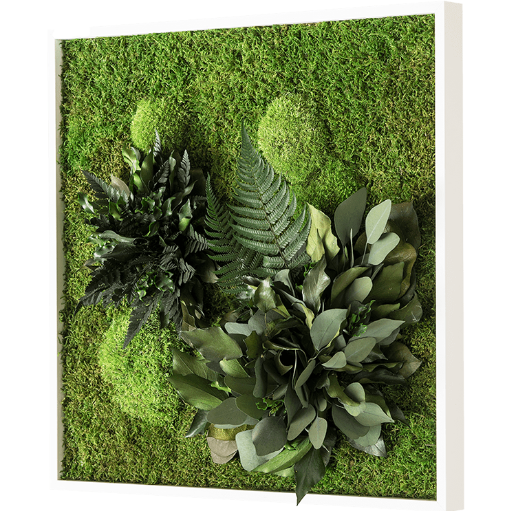 plant wall decor