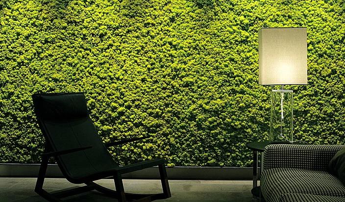 reindeer moss wall
